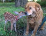 Puppy Kisses.