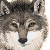 Pixel Wolf by Meirii