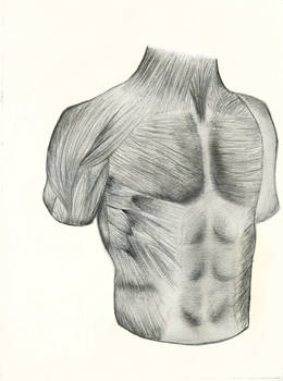 Musculature of Chest