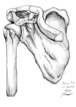 Anterior View of Right Shoulder