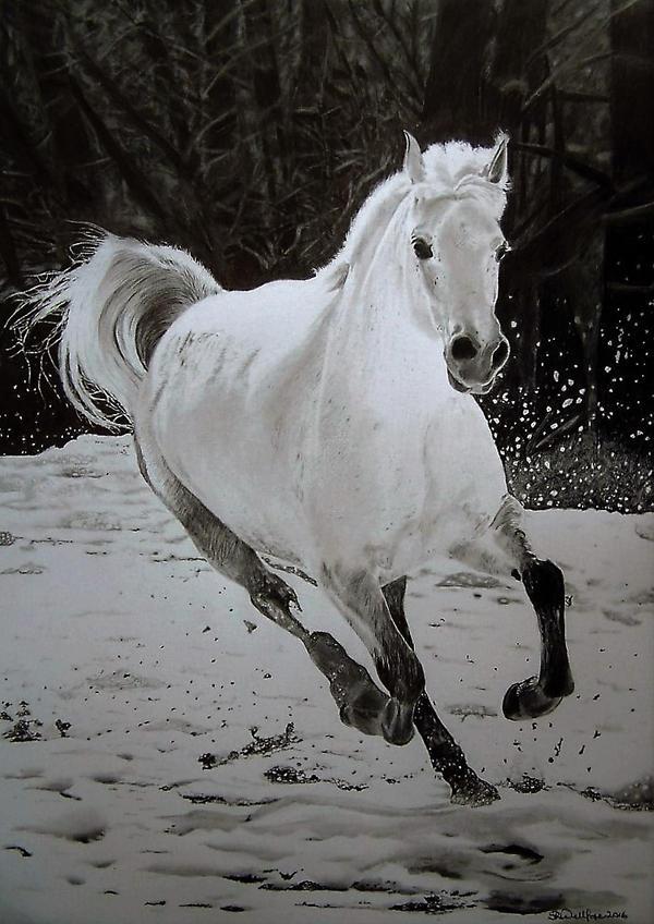 White Horse by Steve2656