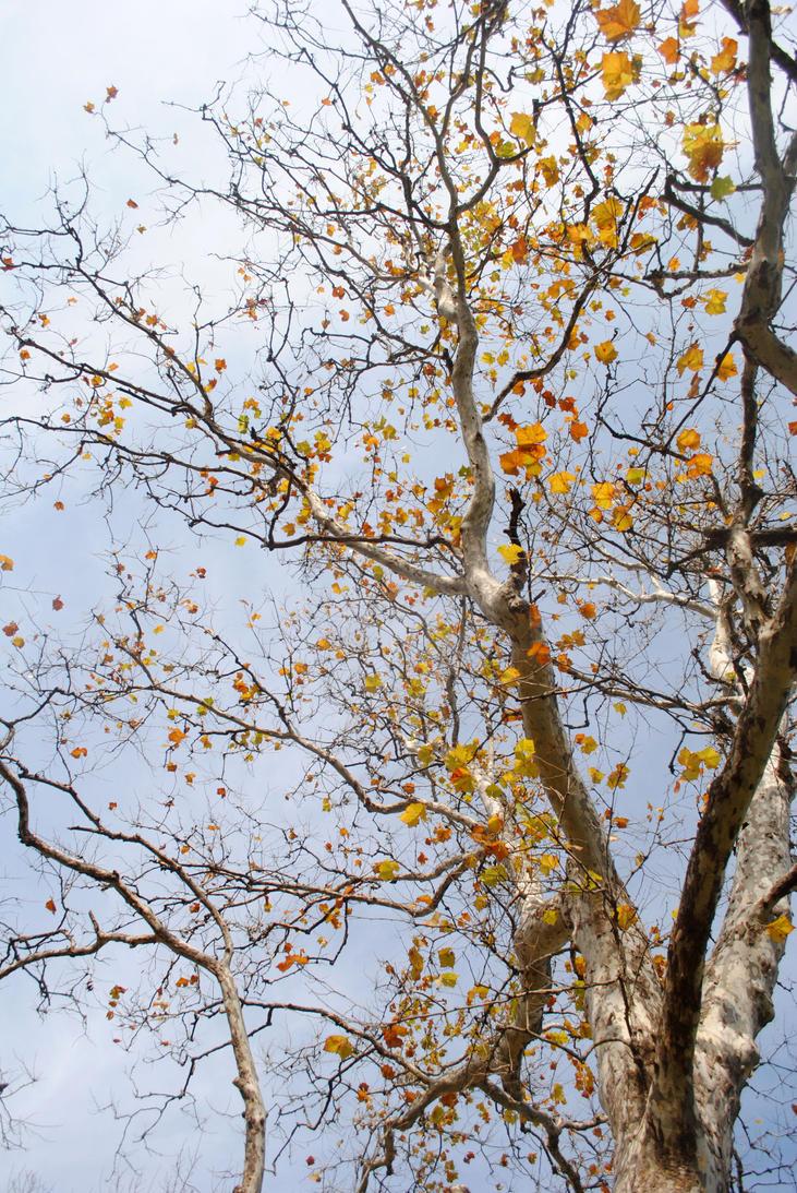 autumn tree leaves by artaf