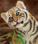 Curious little tiger