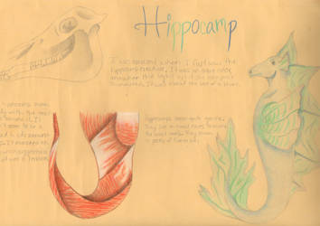 Hippocamp by kdid11