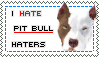 I HATE PIT BULL HATERS