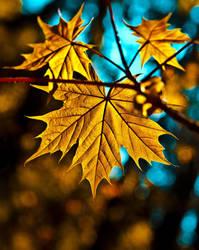 the golden glow by MarvinDiehl