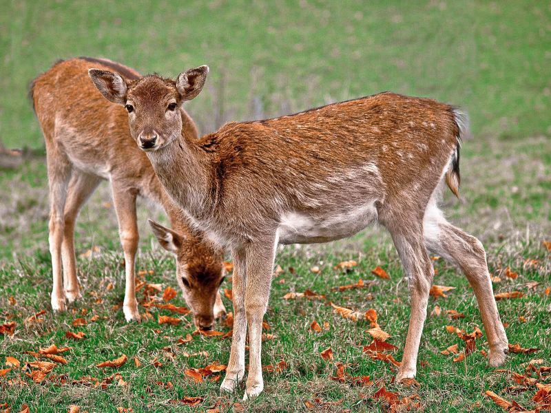 deer guard by MarvinDiehl
