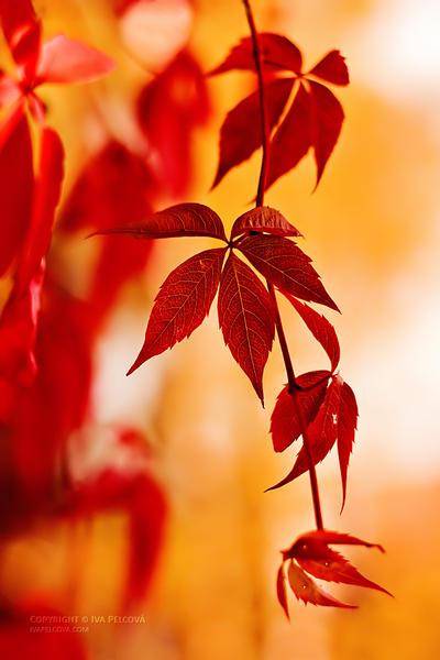 Autumnal by ivya-cz