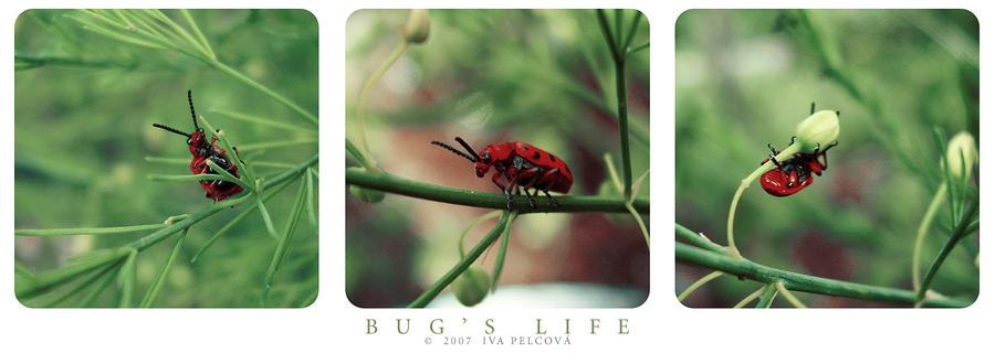 Bug's Life by ivya-cz