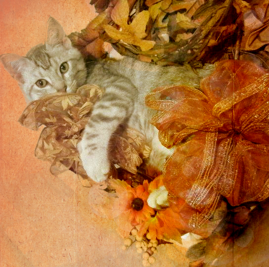 Stein Loves the Autumn Decor by RomaniaBlack