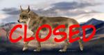 Lynx x Wolf Hybrid Adopt - CLOSED - by Marquez0725