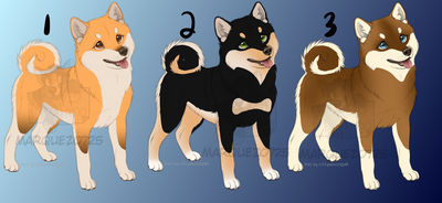 Shiba Inu Adopts - CLOSED -