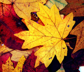 This is my autumn. Leaves  of memory by AnnaArmona