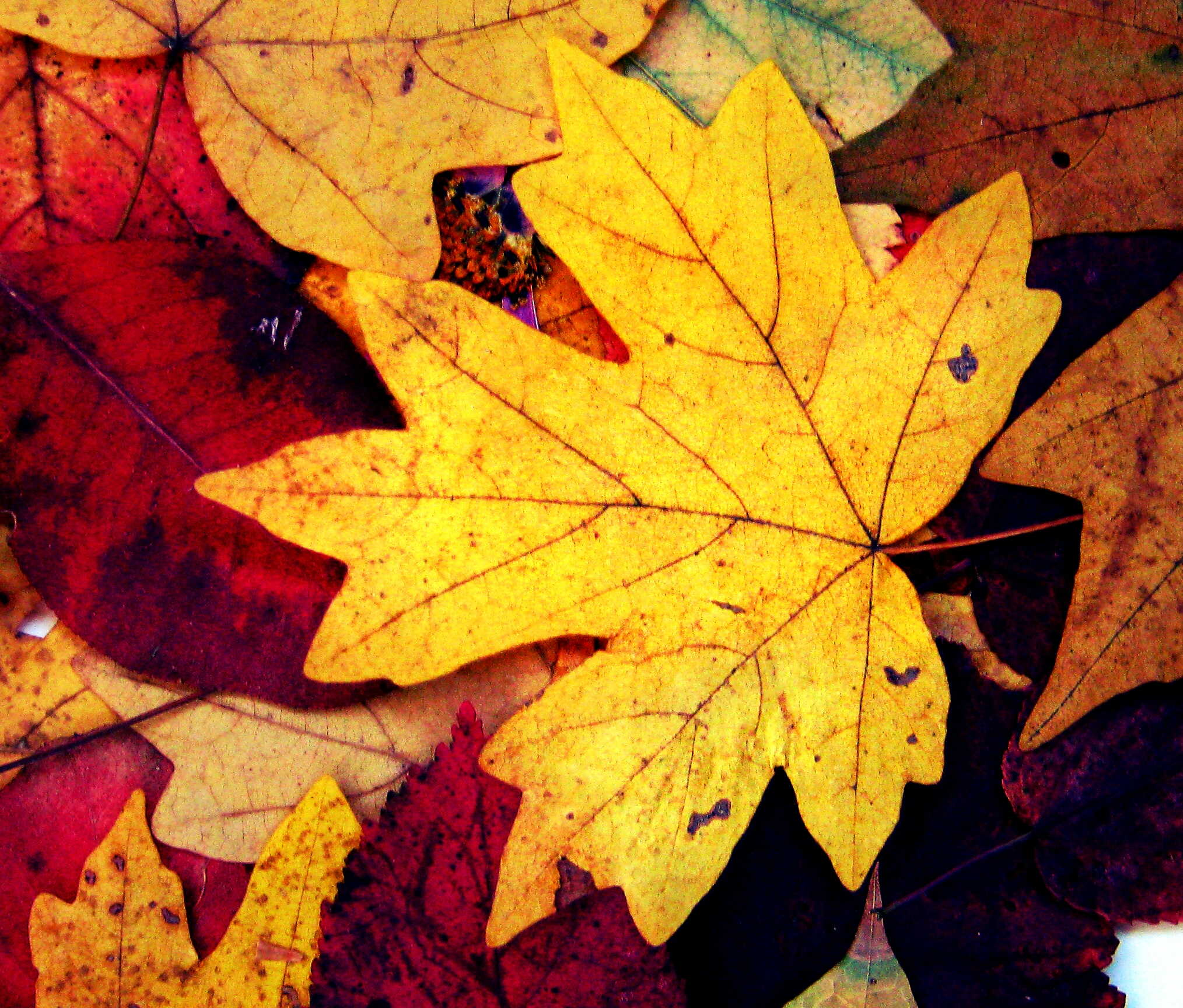 autumn leaves The latest tweets from autumn leaves (@autumnleaves) family owned & operated memory care communities dedicated to the compassionate care & well-being of those living with alzheimer's and other forms of dementia.