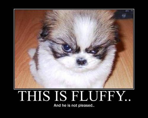 Fluffy..