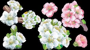 Bonus Flower Sakura
