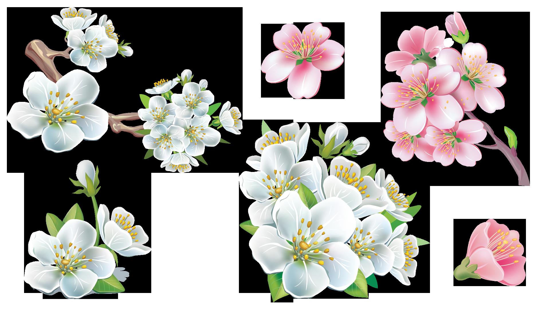 Bonus Flower Sakura by ilabsnsd02 on DeviantArt