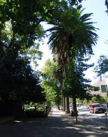 Sac City Street by babygurl83