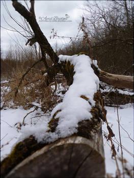 Fallen Snow Tree