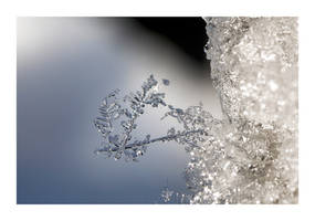 Snow crystals by Torsten-Hufsky