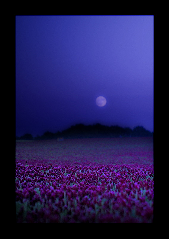 Purple Moonfield by Torsten-Hufsky