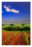 Only fields