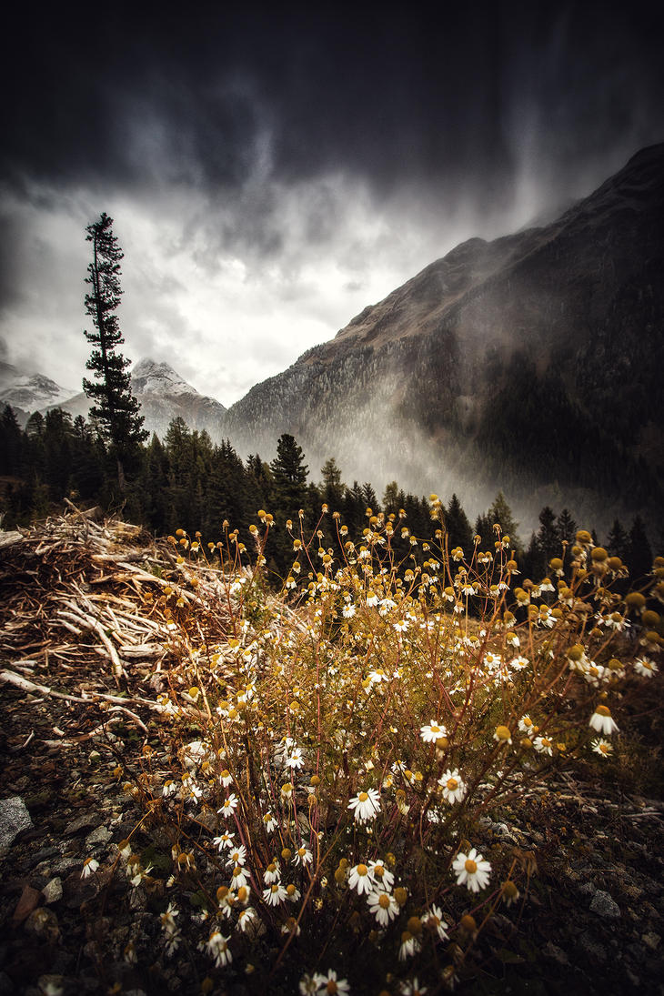 Flowers and Snow by Torsten-Hufsky