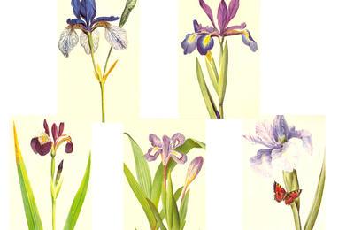 'Flower' Shapes by WashWhenDirty