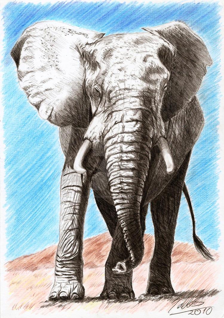 Elefante by PabloSanches