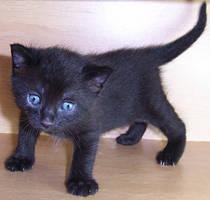 Kitten V by KW-stock