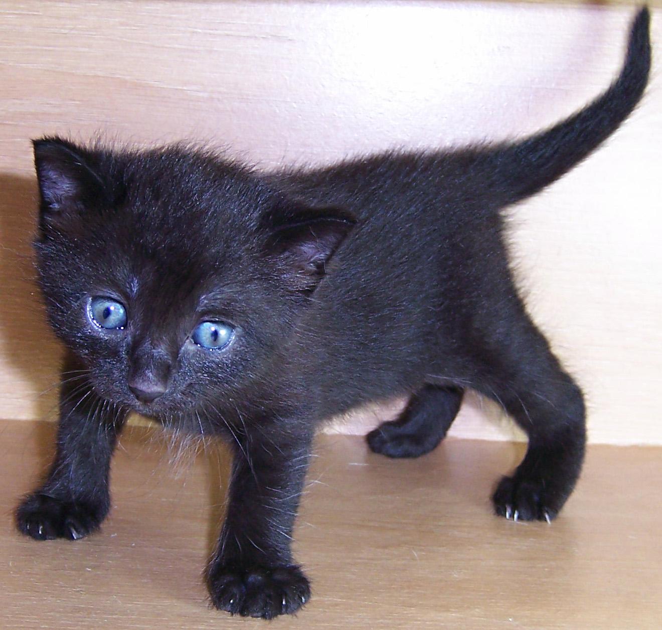 Kitten V