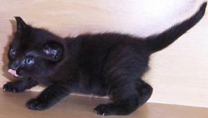 Kitten VI