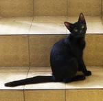 Cat XI