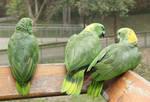 Bird IX