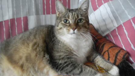 Kisha 1999 - 2016