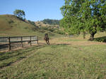 Bandit Galloping