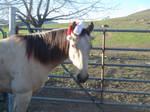 Horse Chirstmas 11 by rachellafranchistock