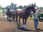 Race Horse -3