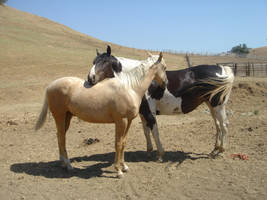 Horse Love -3 by rachellafranchistock