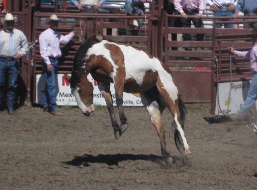Rearing Paint Horse by rachellafranchistock on DeviantArt