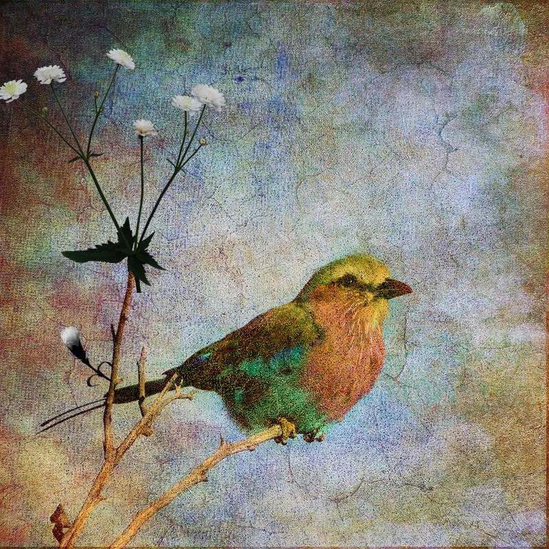 Flowering Seasons by hearthy