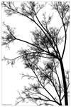 Minimalist Tree