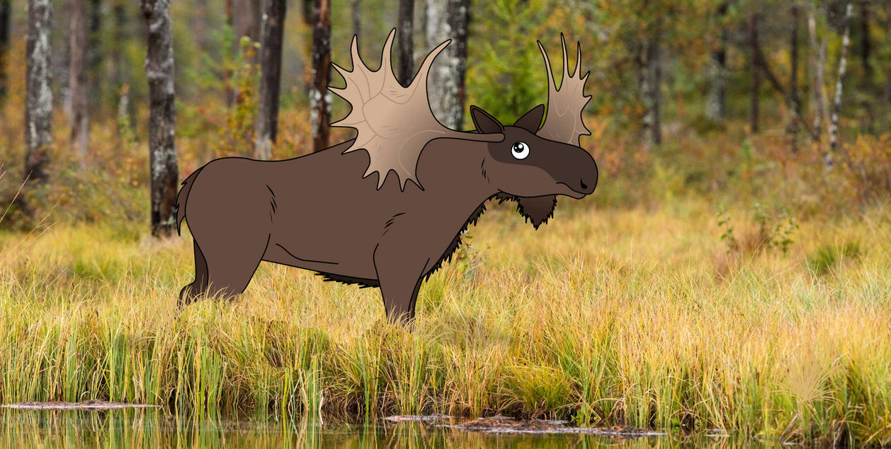 Broad-fronted Moose