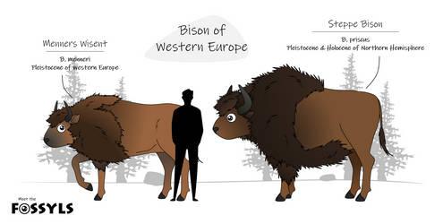 Bison of western europe