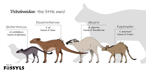 Dichobunidae: the little ones