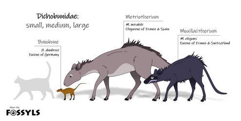 Dichobunidae: small, medium, large