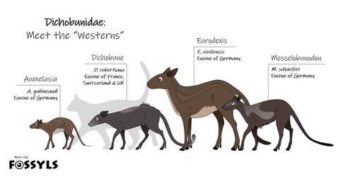 Dichobunidae: meet the Westerns