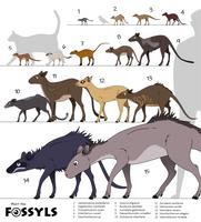 The family of Dichobunidae