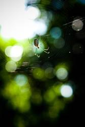 classy spider. by stupidiceblock