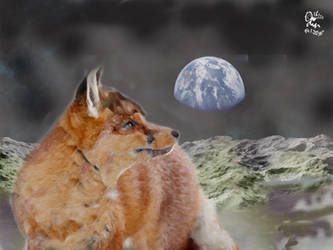 Moonfox on the Moon